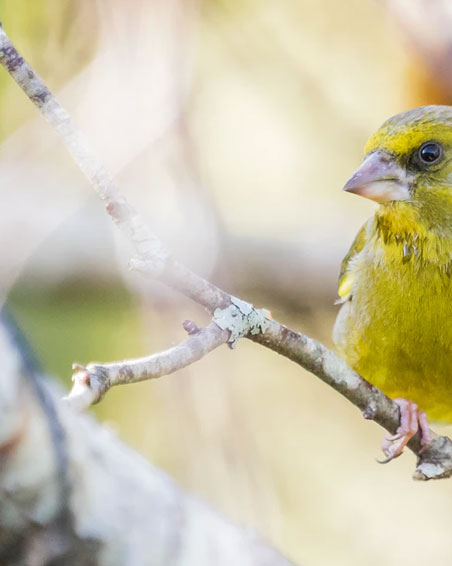 The Canary in the Bitcoin Mine